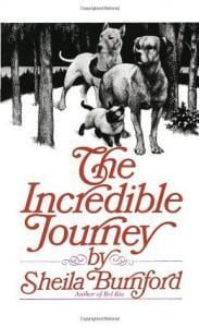 Easy English books to learn English:  The incredible Journey.